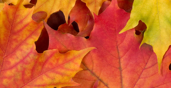 Fall is Here – Tips 2016