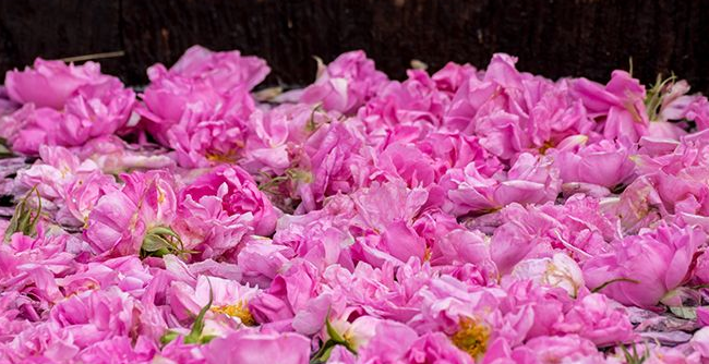 Is Rose Water Good For Your Skin?